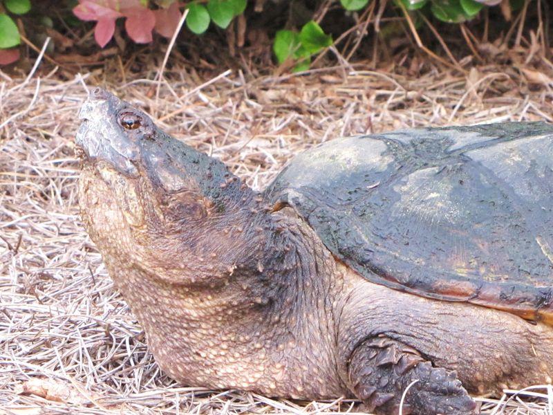 Turtle 004