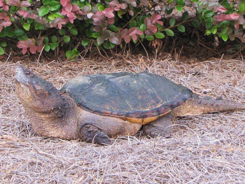 Turtle 005